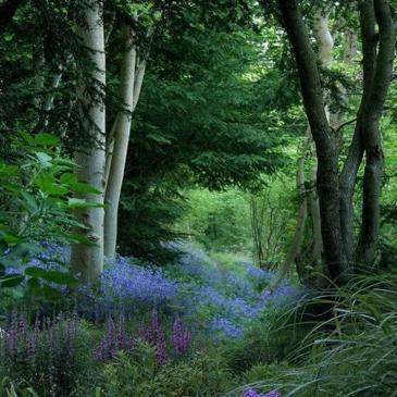 Beautiful Woodland 1